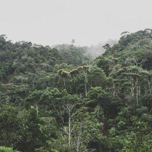 Moody picture of Peruvian Amazon
