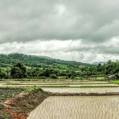 Rice paddies in Ban Nong Tao, Thailand.