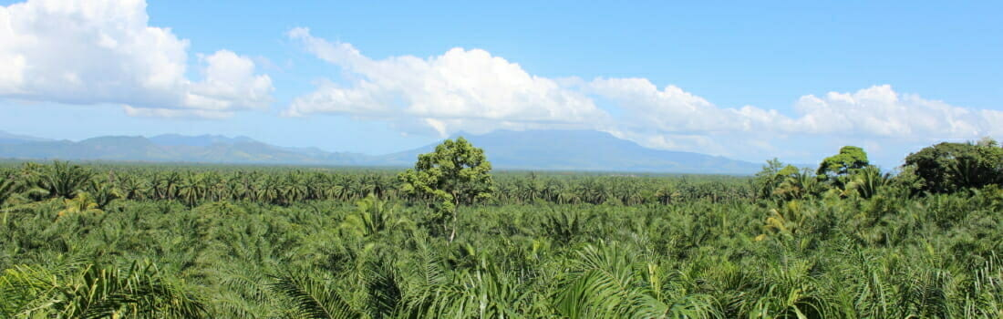 North, East, South, West: Palm Oil Kills Around the Globe