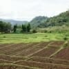 Sob Moei was luscious and green because it was the rainy season! This means that rice planting season will soon arrive.