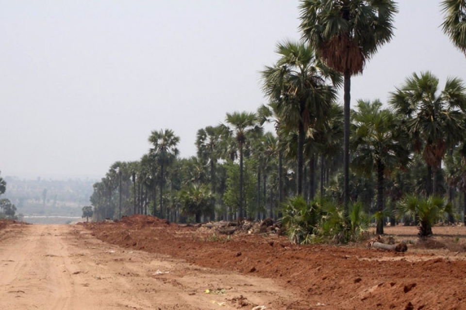 Yenanchaung Township, Magway Division.  Livelihood Impacts.  Vast amounts of palm trees in War Roe village, Yenanchaung Township, Magway Division were cleared for oil and gas pipeline construction in February 2012 to the detriment of local residents, who depend on these trees for house building materials, palm sugar, and palm wine. Newly planted trees will take twenty years until they grow to maturity and can replace the ones that have been cleared. Villagers did not receive compensation for destruction to palm trees.