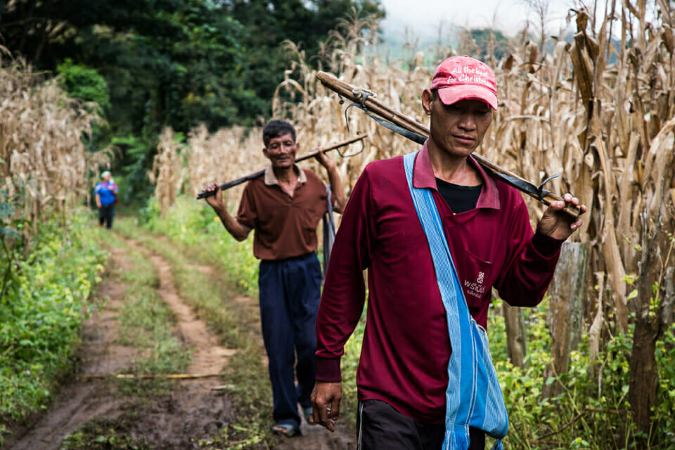 Farmers at corn fields in Mae Sa Village. This community now works under farming contracts with big agriculture companies, and after unfulfilled promises of regular income, many villagers are indebted to the banks.