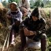 Farmers harvesting rice.