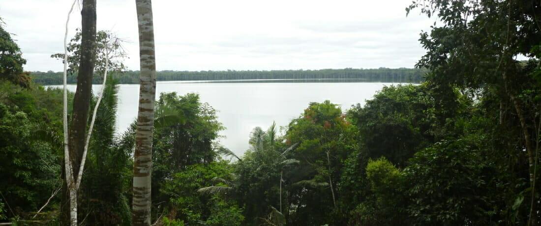 Interning in the Amazon