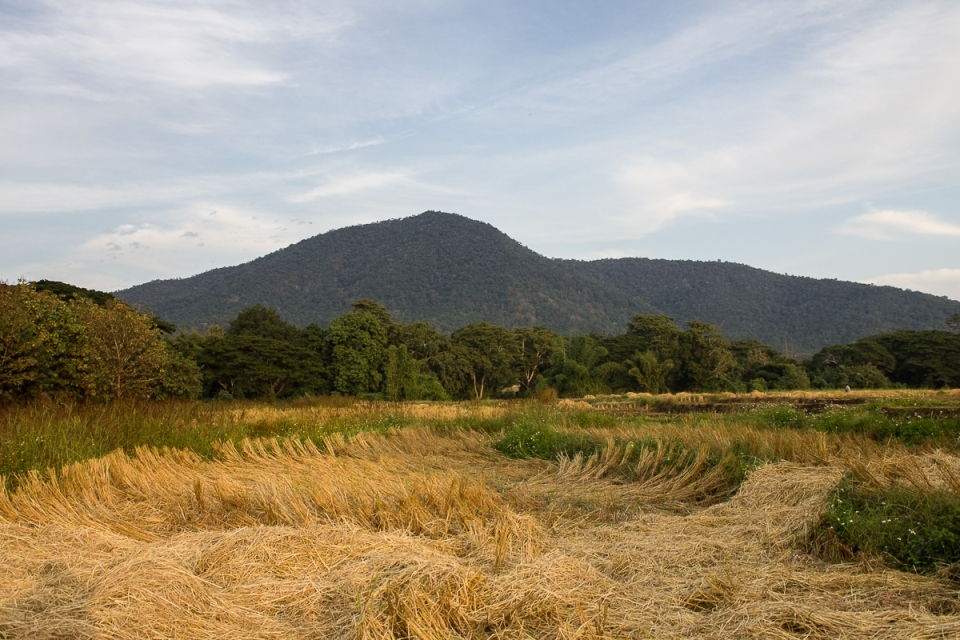Harvested rice fields from Sa-iab Village.