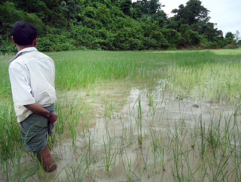 Fields covered by construction runoff in Mala Kyun village