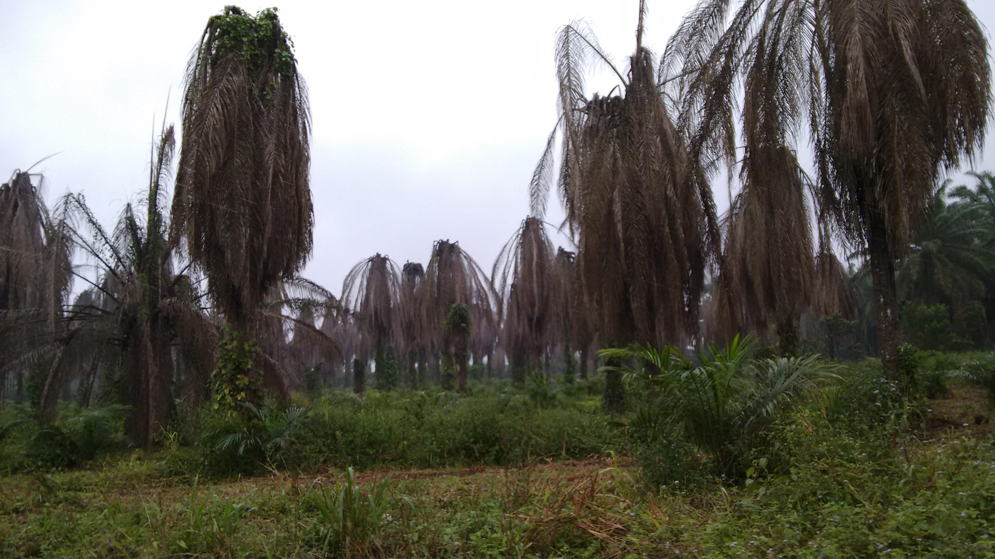 Honduran Farmers Sue World Ban...
